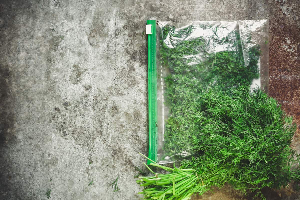 A bundle of dill inside a Ziploc bag, Are Ziploc Bags Airtight? [And how to make them so]