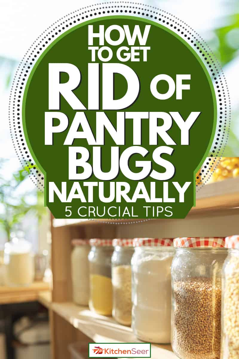 A pantry with jar filled with different ingredients and spices for cooking, How To Get Rid Of Pantry Bugs Naturally [5 Crucial Tips]
