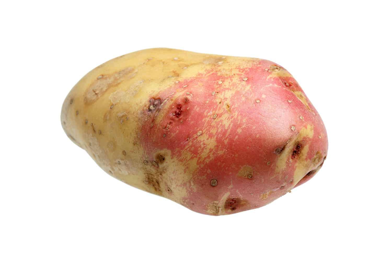An up close photo of a King Edward potato