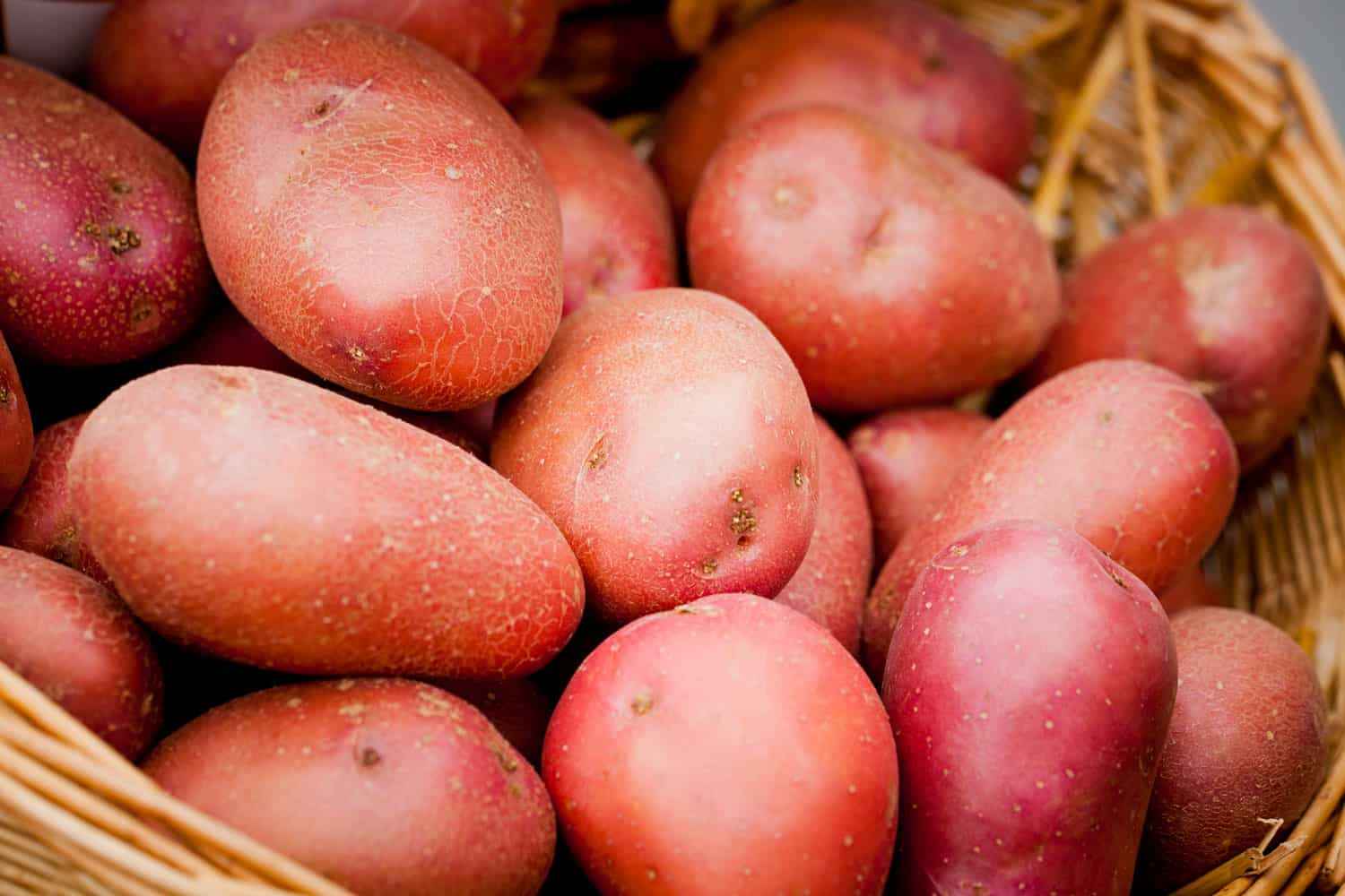 An up close and detailed view of rooster potatoes