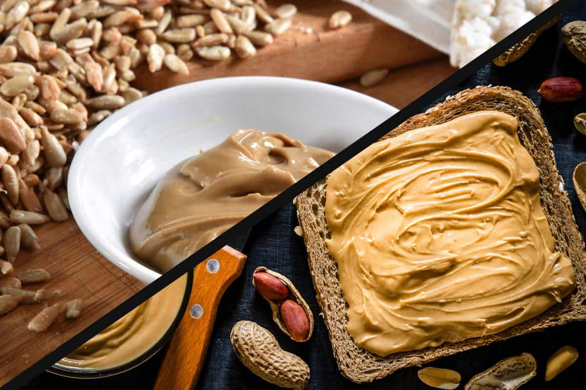 A collage of peanut butter and sunflower butter, Sunflower Butter Vs Peanut Butter - How Do They Compare?