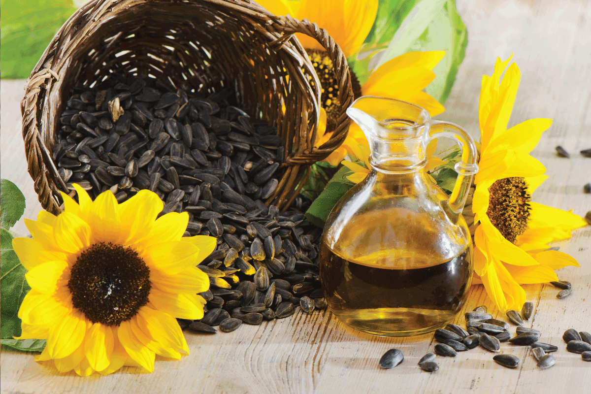 Sunflower oil in a bottle and sunflower seed on the wooden table. Can You Use Sunflower Oil Instead Of Vegetable Oil