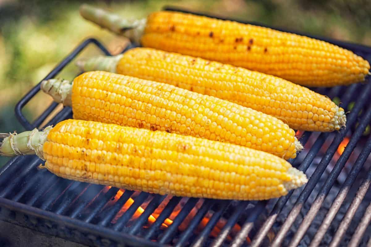 Corn on the grill in front of a tent on a camping