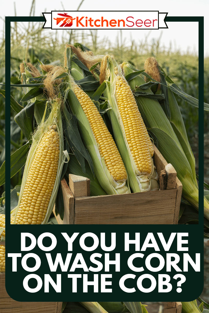 The corn plants in the field, Do You Have To Wash Corn On The Cob?