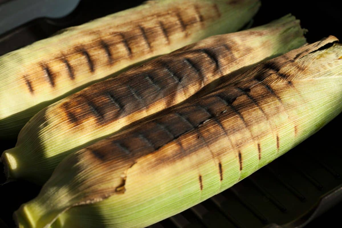 Grilled unpeeled corn close-up