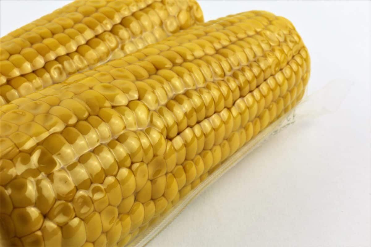 Vacuum sealed fresh corncobs for sous vide cooking cutout on white, close up