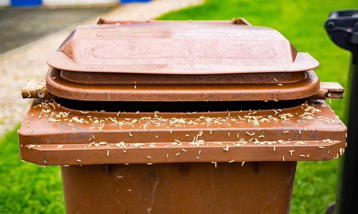 A lot of maggots on a brown trash can