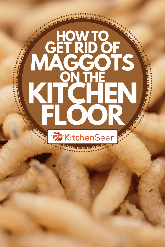 A macro maggots in a container, How To Get Rid Of Maggots On The Kitchen Floor