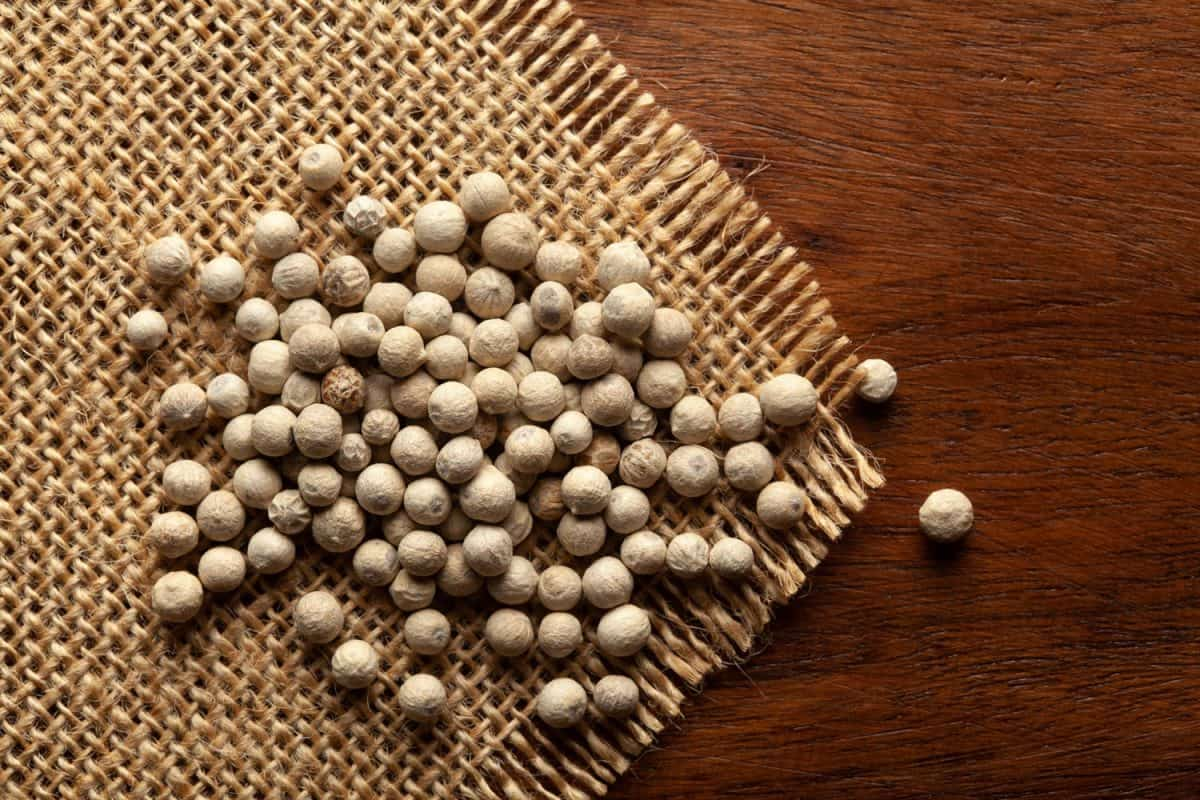 Macro close-up of Organic White peppercorns (Piper nigrum) on the wooden top background and jute mat, When To Use White Pepper?
