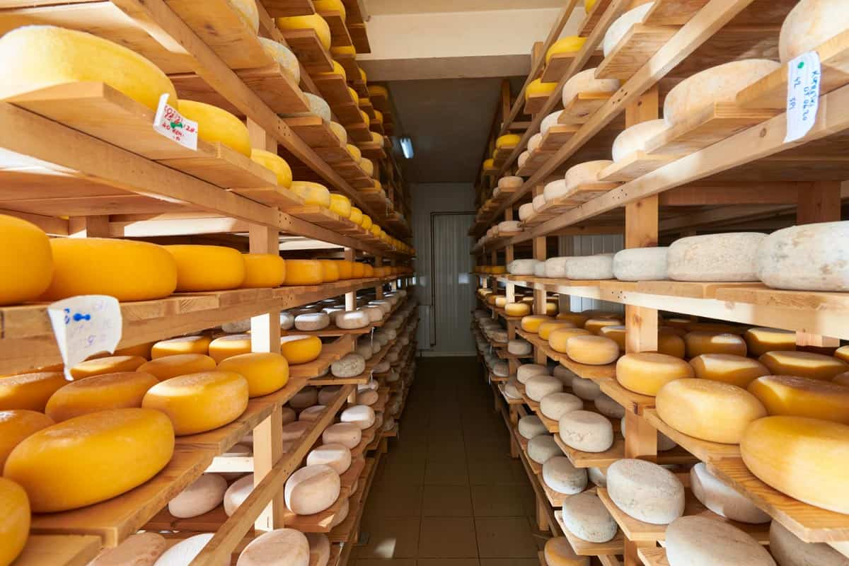 Aging old cheese in the factory, Does Cheese Always Age Well Or Does It Go Bad Eventually? [According To Type Of Cheese]