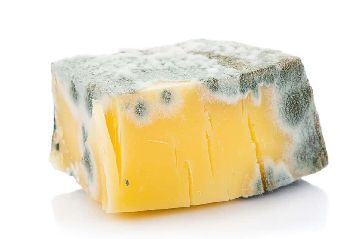 Piece of inedible moldy cheese