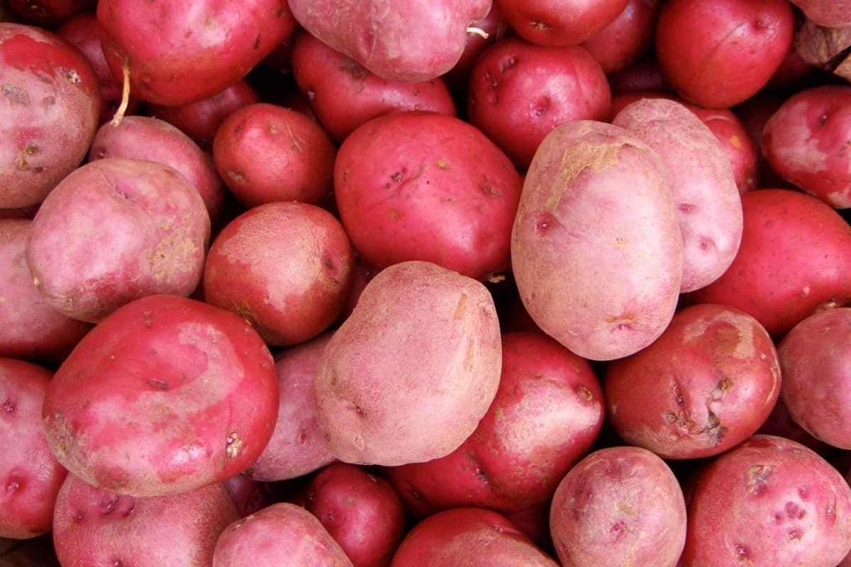 Delicious cranberry sweet potatoes