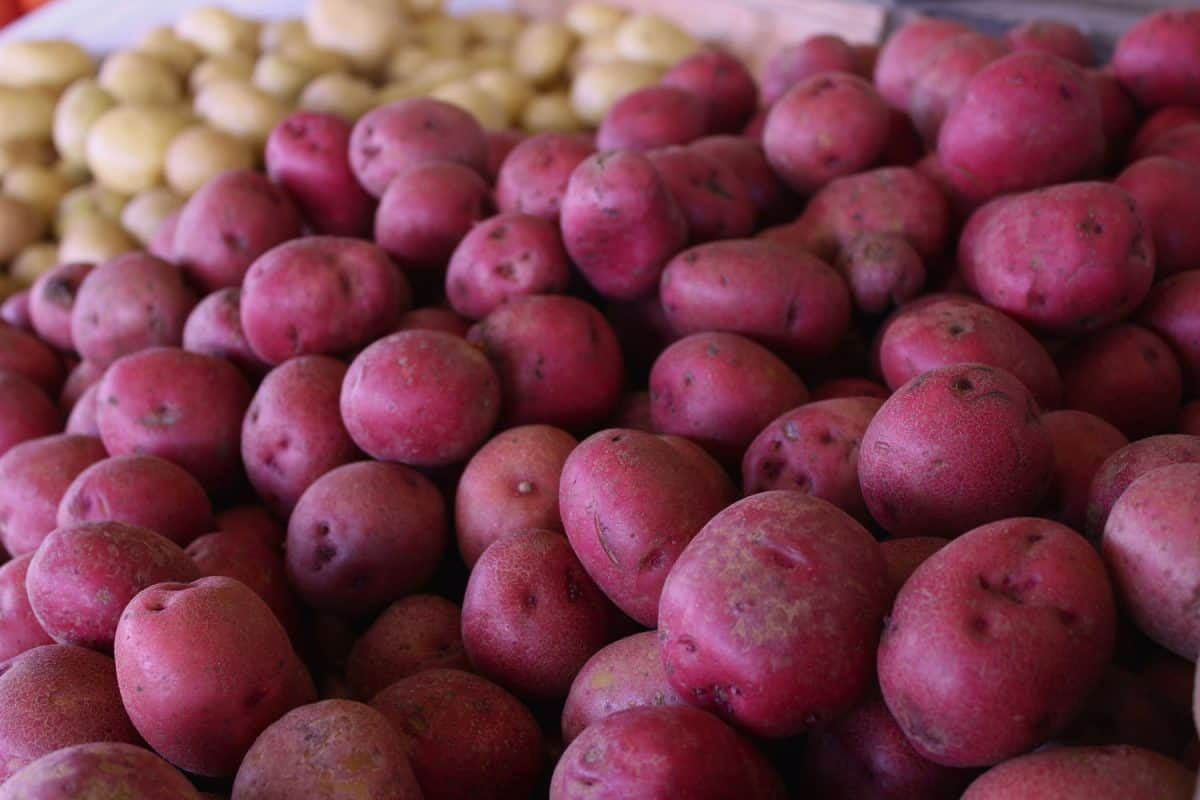 Red potatoes displayed at the market